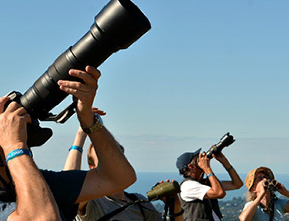 Amazing Batumi Birding Festival